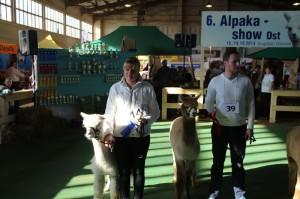 Alpakashow Ost 2014 105
