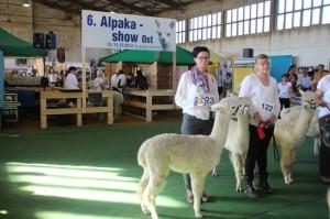 Alpakashow Ost 2014 150